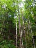 Magiska trän Royaltyfri Foto