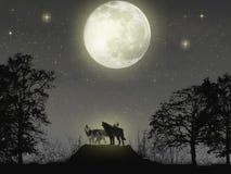 magiska wolves Royaltyfri Fotografi