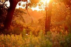 magiskt ögonblick Solnedgång i skog Royaltyfria Foton