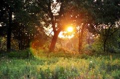 magiskt ögonblick Solnedgång i skog Royaltyfri Fotografi