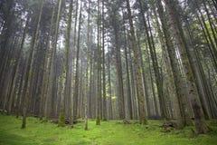Magiskt grönt mossagolv i skogen Fotografering för Bildbyråer