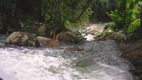Magiskt landskap av rainforesten och floden med vaggar lager videofilmer