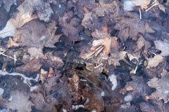 Magma congelé avec les feuilles tombées photos libres de droits