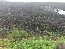 Magmastrand in Jeju-Insel lizenzfreie stockbilder