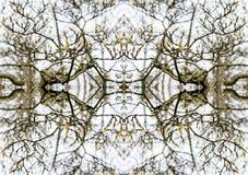 A magnólia brota a árvore foto de stock royalty free