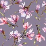 A magnólia cor-de-rosa floresce em um galho no fundo cinzento Teste padrão sem emenda Pintura da aguarela Mão desenhada Imagem de Stock Royalty Free