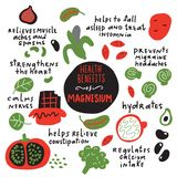 Magnesium health benefits.Illustration of magbesium rich foods and its benefits. Vector. royalty free illustration