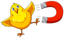 Magnet and chick Stock Images