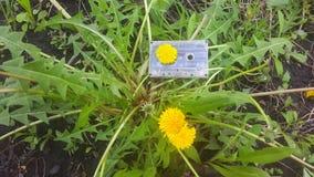 Magnetband für Tonaufzeichnungen der Hintergrund des Löwenzahns Lizenzfreies Stockfoto