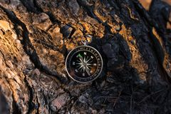 A magnetic compass in a autumn tree against royalty free stock image