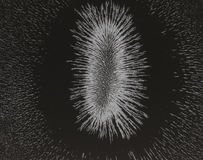 Magnetic field of a cow magnet Royalty Free Stock Photos