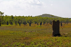 Magnetic Termite Mounds Stock Images