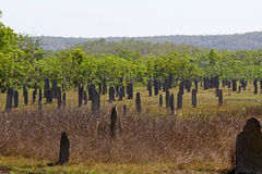 Magnetic Termite Mounds Stock Image