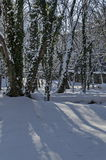 Magnetic winter scene of forest and ivy covered with snow in park, Sofia Royalty Free Stock Photo