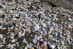 The seashells on Magnetiti resort near Ureki village, Georgia. Magnetiti is the resort with black magnetic sand on the Black Sea coast in Georgia near Ureki Royalty Free Stock Photography