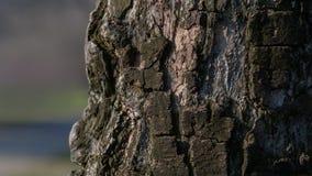 Magnifi искусства, абстрактных и художнических предпосылки картины макроса объектива Стоковые Фото