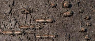 Magnifi искусства, абстрактных и художнических предпосылки картины макроса объектива Стоковая Фотография RF