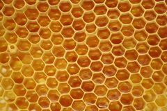 Honeycomb, inside the beehive. Magnificated honeycomb, inside the beehive Royalty Free Stock Photos
