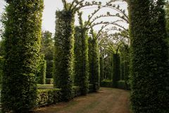 Magnificent arch of neat bushes made in the form of a corridor stock photos