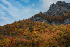 Magnificent autumn carpet in The Rhodope montains, Bulgaria Royalty Free Stock Photo