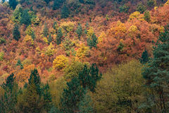 Magnificent autumn carpet in The Rhodope montains, Bulgaria Stock Image