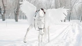 Magnificent big majestic white horse with wings executes a command, raising its foot in air, charming Pegasus in the. Winter snowy forest, animal impatiently stock video footage
