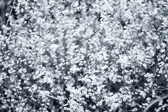 Magnificent bush of white flowers royalty free stock photos