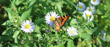 Magnificent butterfly and beautiful flowers in the grass stock photos