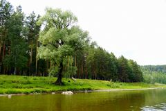 The most picturesque river AI. Bashkiria. Ural. Magnificent cliffs, green forest and river inspire. Beauty of Russian nature. Landscapes Of The Urals. All this royalty free stock photo