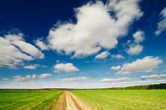 Magnificent cumulus clouds  and autumn field. Stock Image