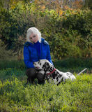 Magnificent Dalmatian dog on the nature with a girl Stock Photography