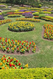The magnificent flower beds Royalty Free Stock Images
