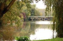 Magnificent foggy autumn in park Stock Photos