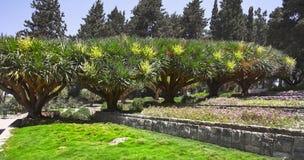 Magnificent  garden Stock Photos