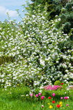 Magnificent garden in spring Stock Photo