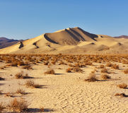 Free Magnificent Greater Sandy Dune Eureka Royalty Free Stock Photos - 13355308