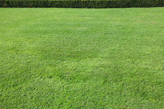 Magnificent green lawn Royalty Free Stock Photos