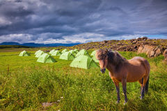 Magnificent Icelandic horse and  summer camp Stock Photos