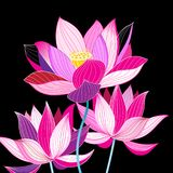 Magnificent illustration of beautiful lotuses Royalty Free Stock Photo