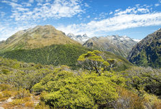 Magnificent landscapes of New Zealand Royalty Free Stock Image