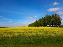 Magnificent landscapes of Ukraine royalty free stock image