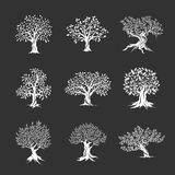 Magnificent olive and oak trees silhouette stock illustration