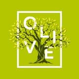 magnificent olive tree vector illustration