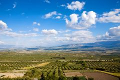 Magnificent panorama of olive groves. Magnificent panorama of surrounding olive groves by Baeza town, Andalusia, Spain Stock Photography