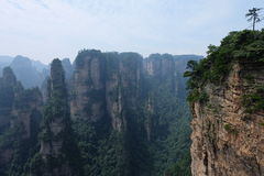 Stunning landscape Magnificent mountain in Zhangjiajie National Forest park in china. In China Hunan province. Lonely tree on the steep mountain Stock Photo