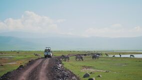 Magnificent scene of suv in safari passing by dazzle of wild zebras near watering pond in african savanna. Group of