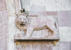 Magnificent sculpted lion on pink stone. Stock Images