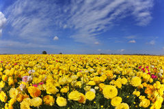 Magnificent spring day in fields flowers Royalty Free Stock Image