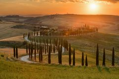 Magnificent spring landscape at sunset. Royalty Free Stock Images
