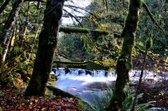 A babbling brook in a mossy forest stock photography